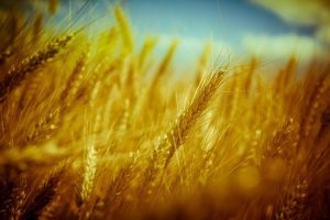 harvest picture
