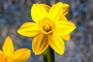 spring-3952265_960_720